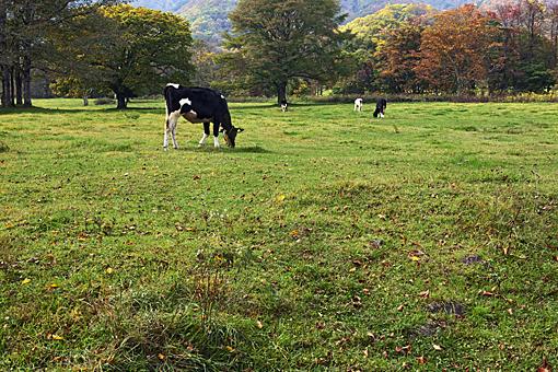 牧場(秋)_01.jpg